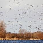 Lots of birds III